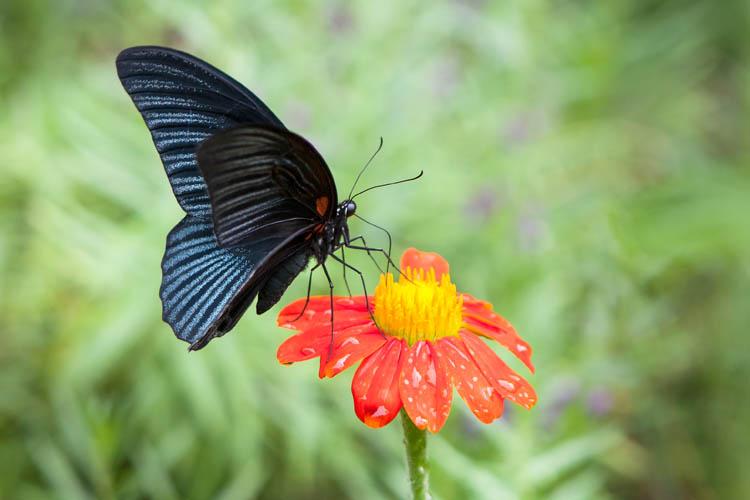 KM30_Butterfly_20151208_017
