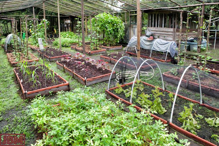 KM30_Seed_garden_20160628_005