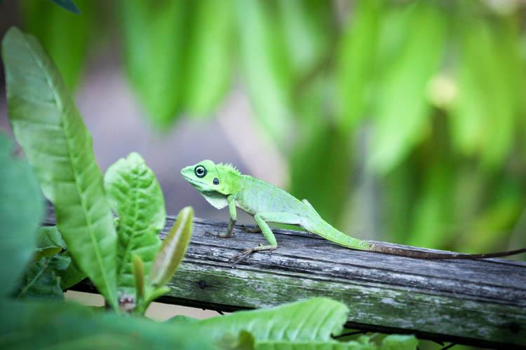 Lizard_20151126_012