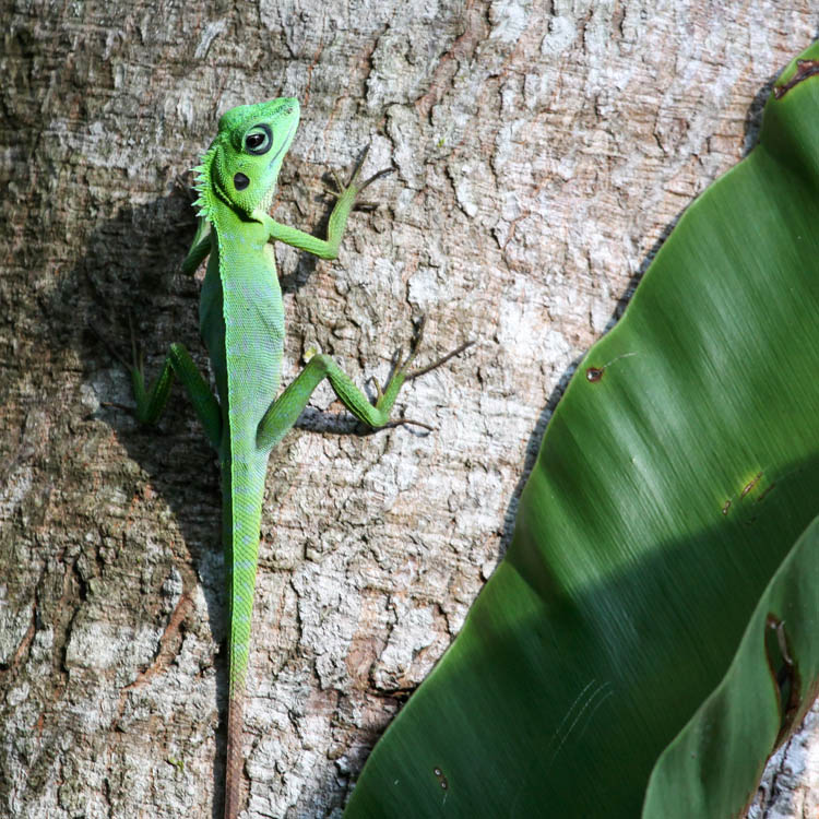 Lizard_20151126_013