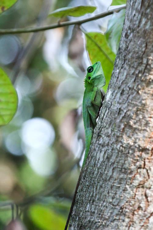 Lizard_20151126_015