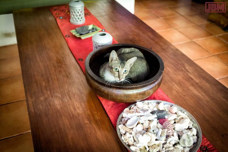 sanur_cats_20160830_001