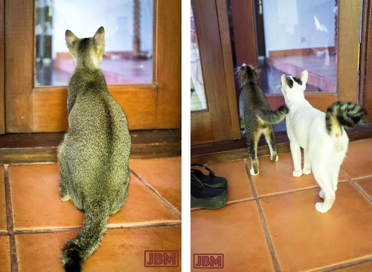 sanur_cats_20160830_030_1