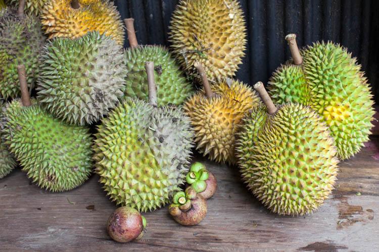 Tewang_Rangkang_Durian_20150215_038